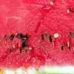 Melonenkerne Essen richtig gemacht – so geht's