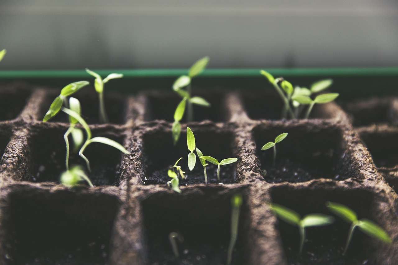 Urban gardening Ideen