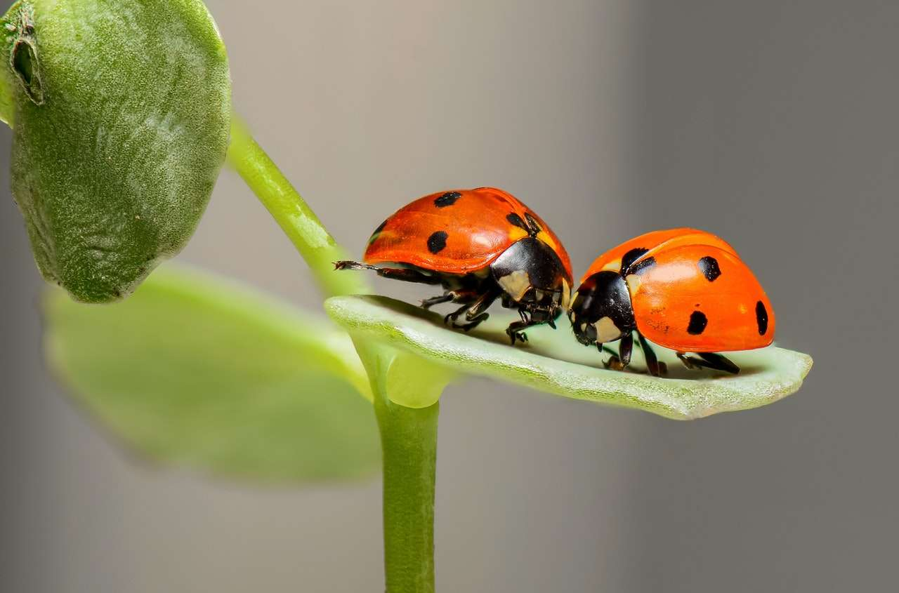 Insekten bestimmen App