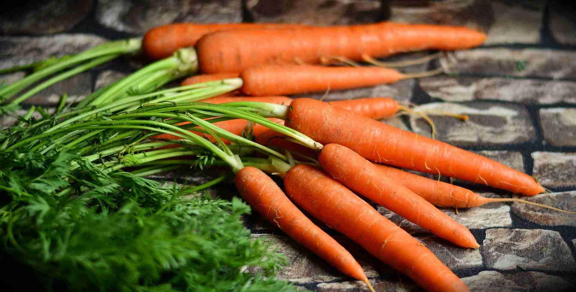 Karotten Vitamine