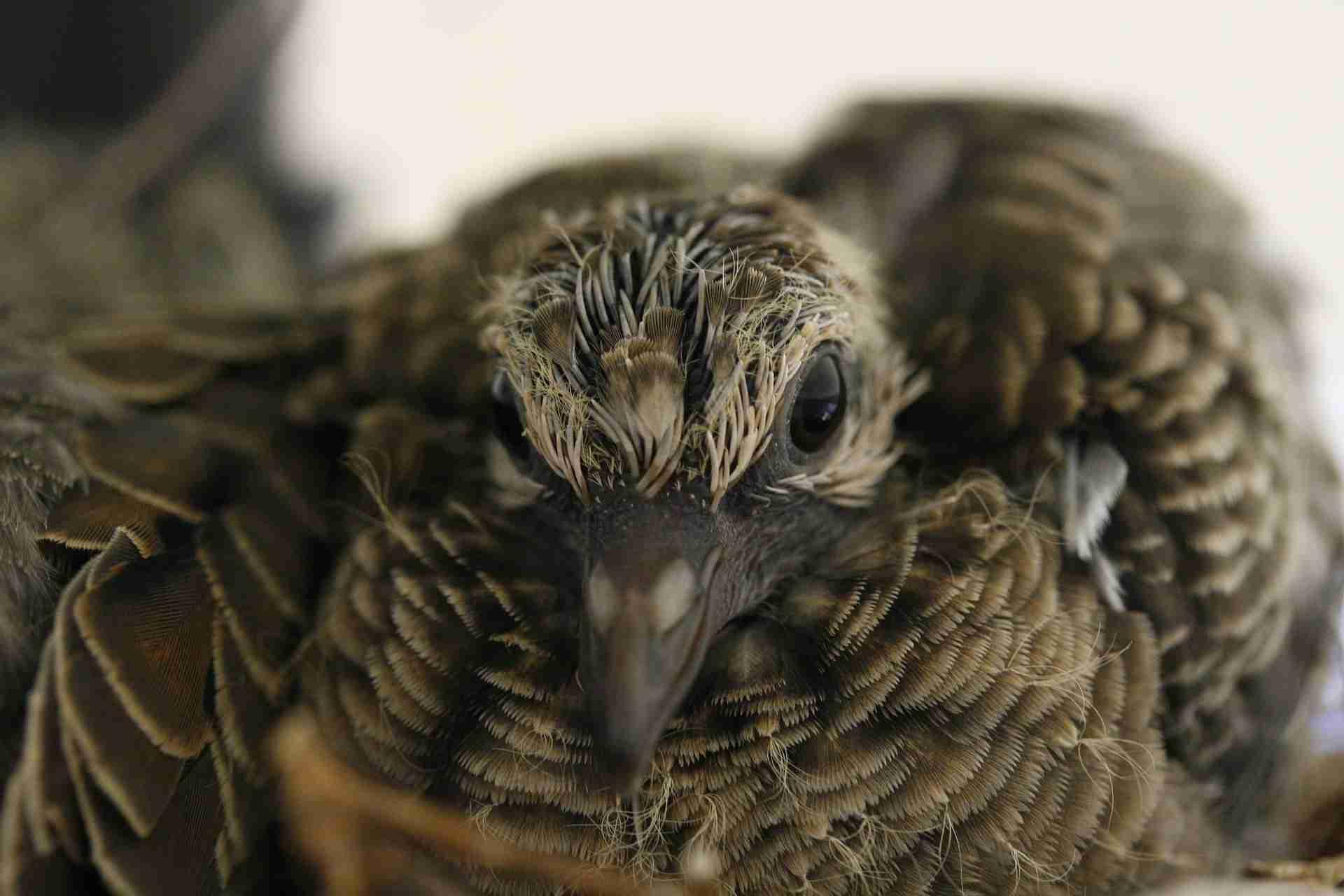 Baby-Taube sehen