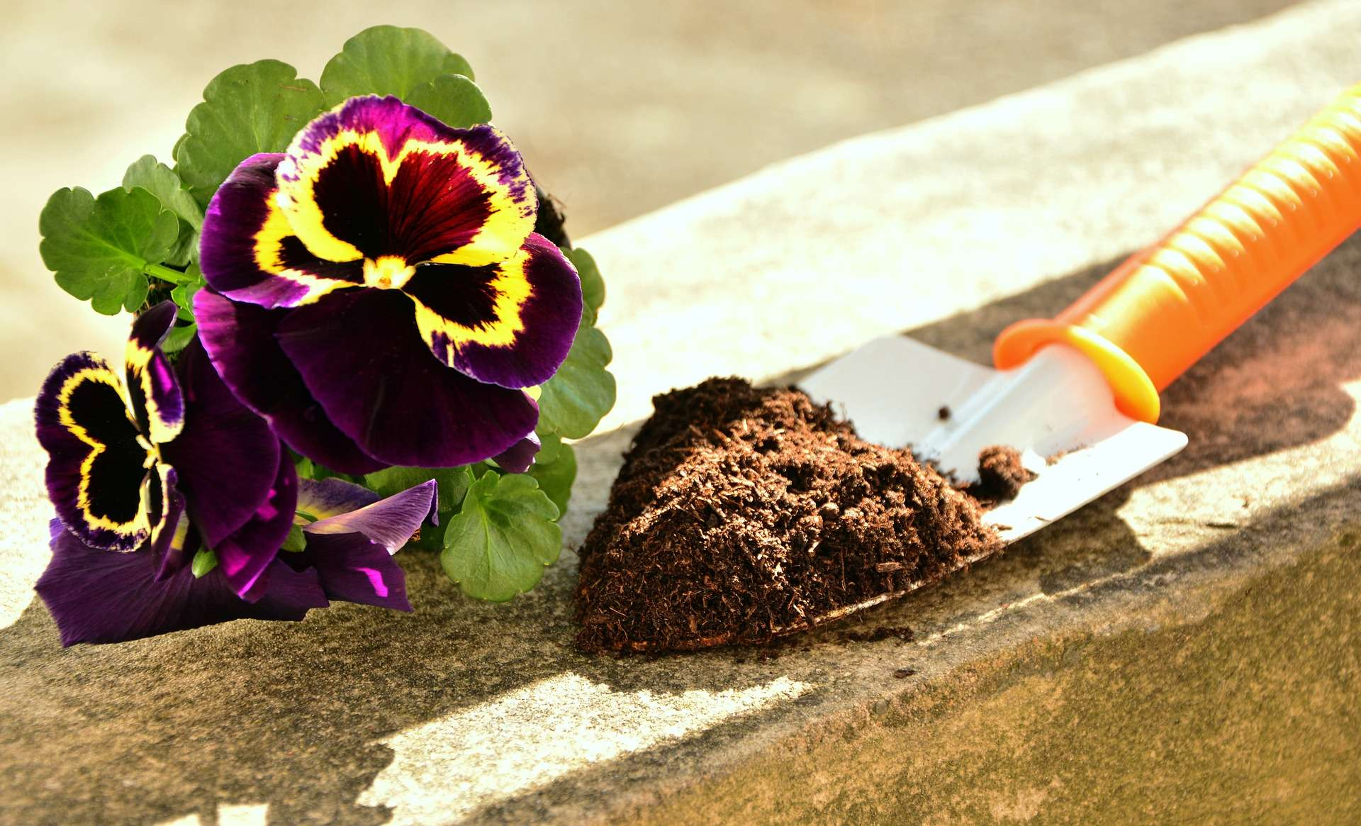 Blumenerde Schimmelt