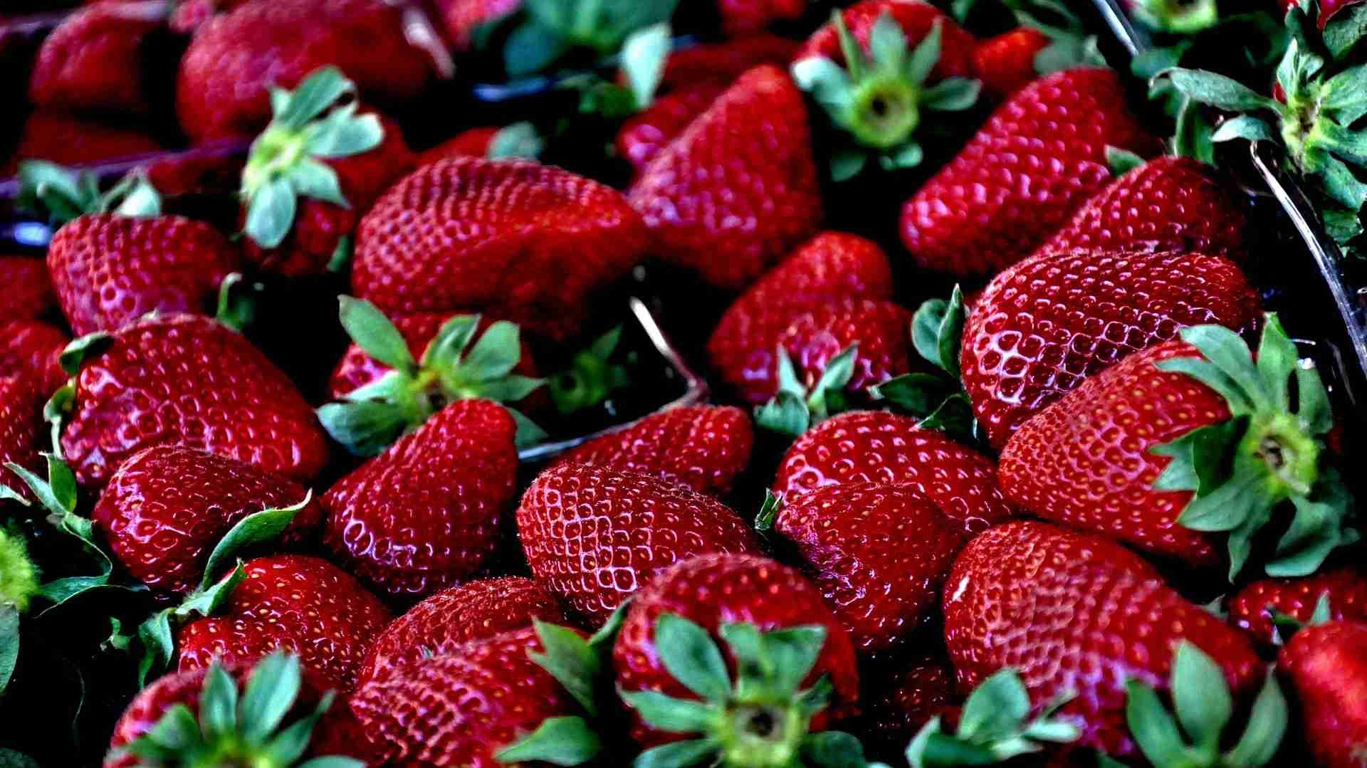 Erdbeeren vermehren Anleitung