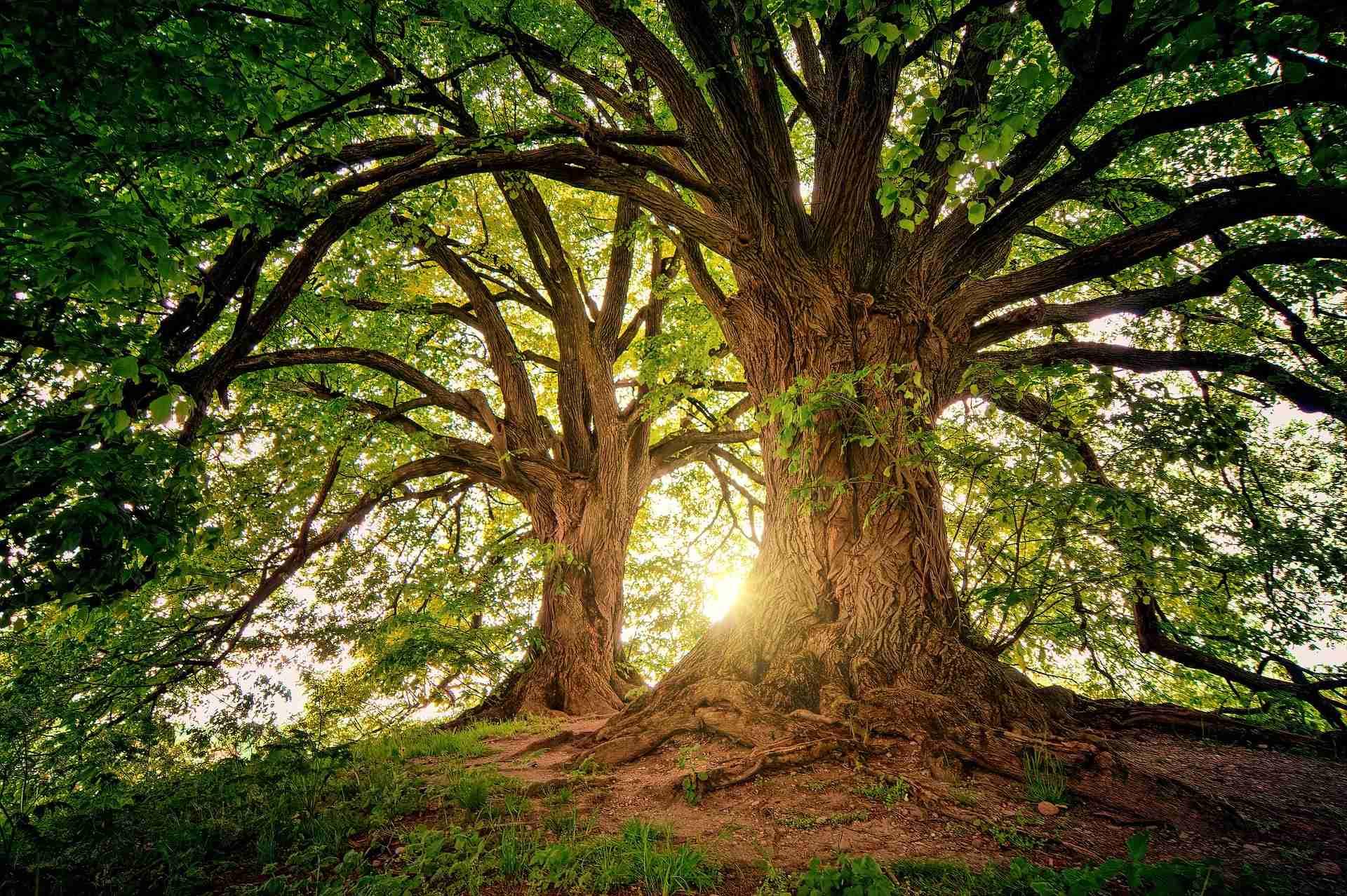 Baum Sommer bewässern