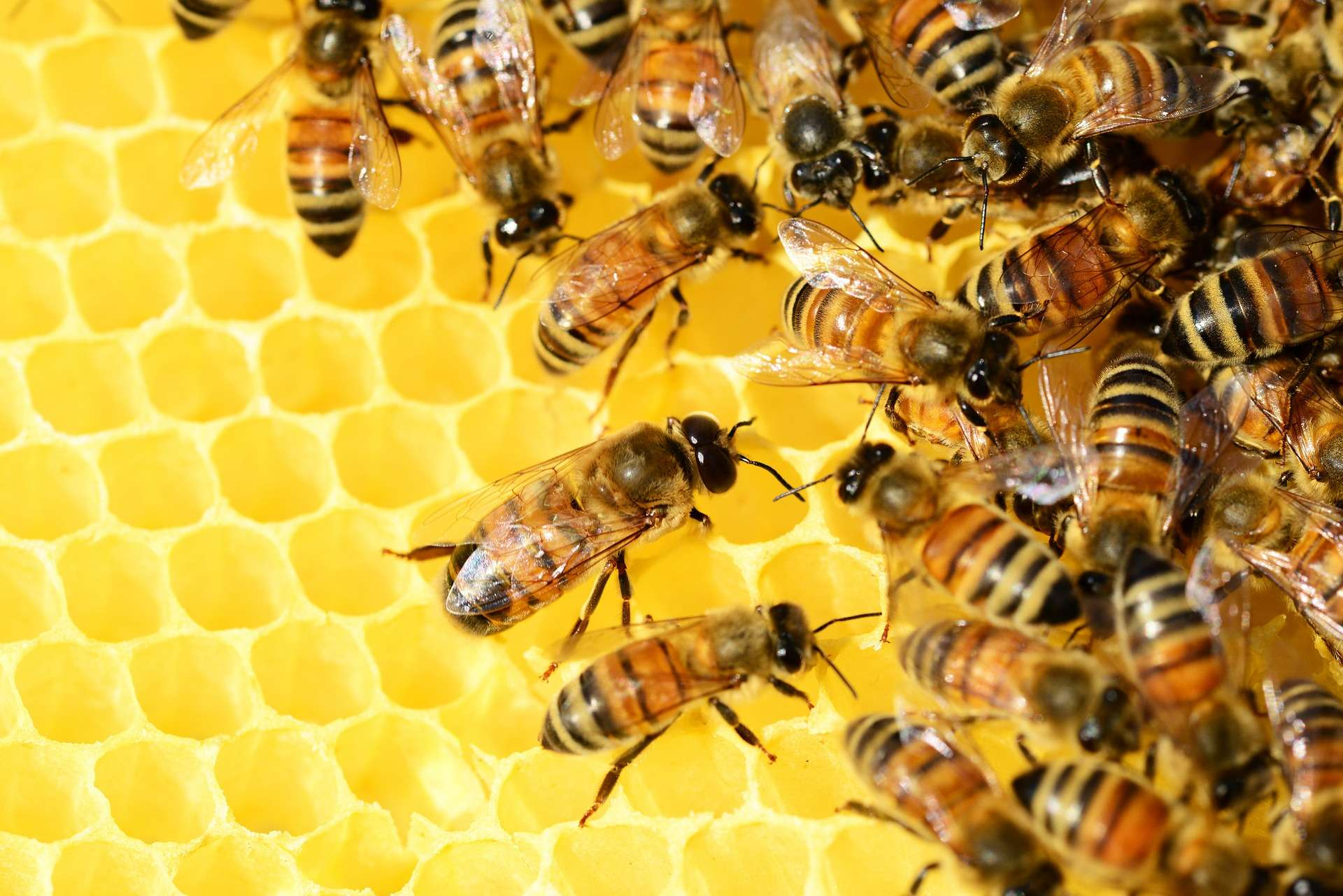 Bienenpatenschaft übernehmen