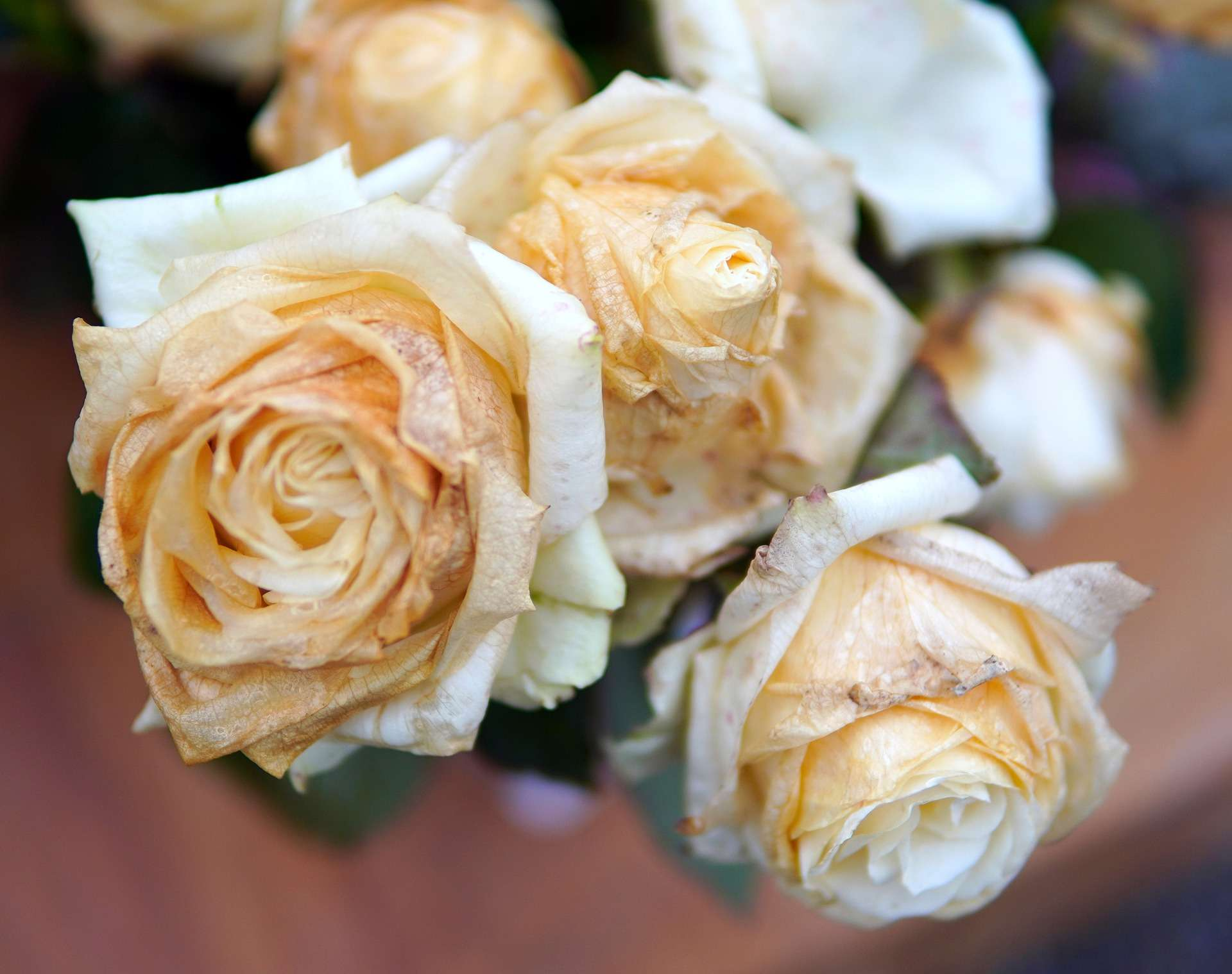 Blumenstrauß verwelkt retten
