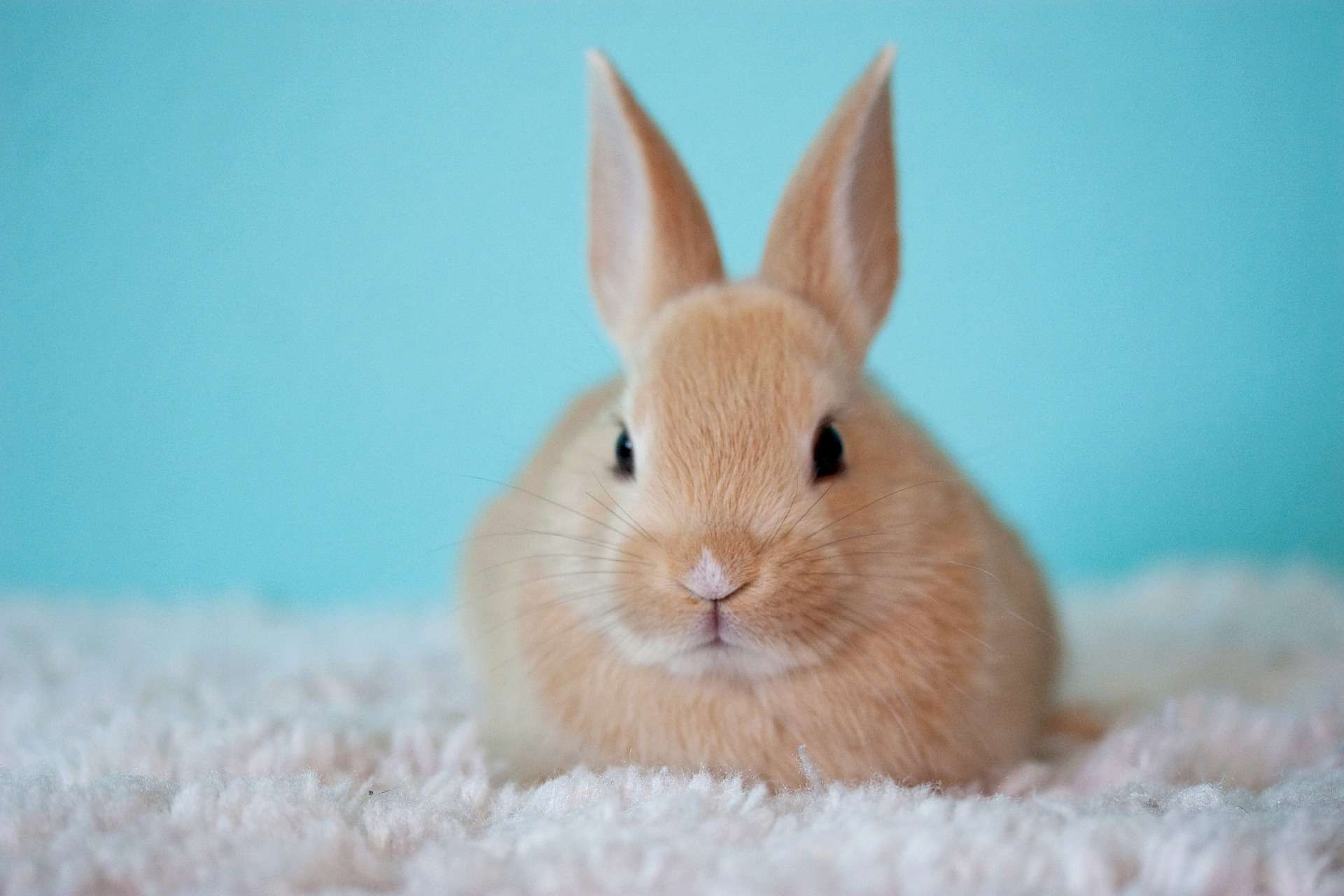 Kaninchen Körpersprache deuten