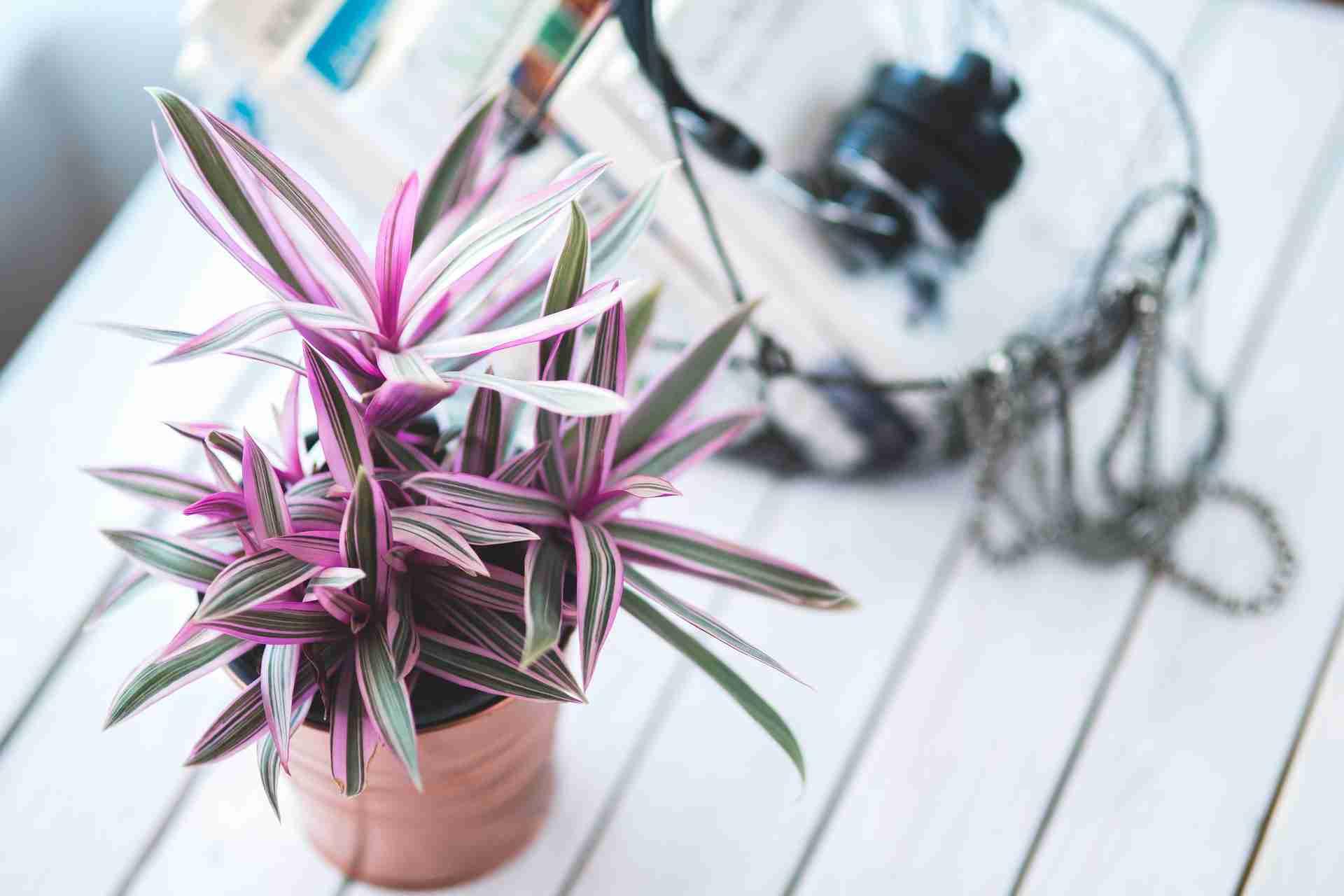 Pflanzen Urlaub bewässern