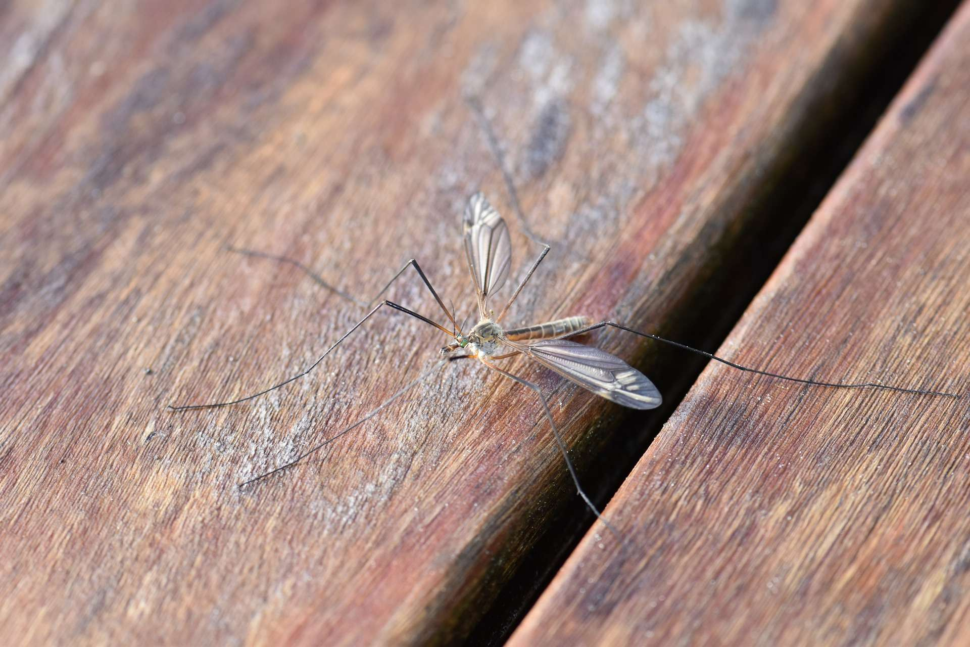 Mücke Finden