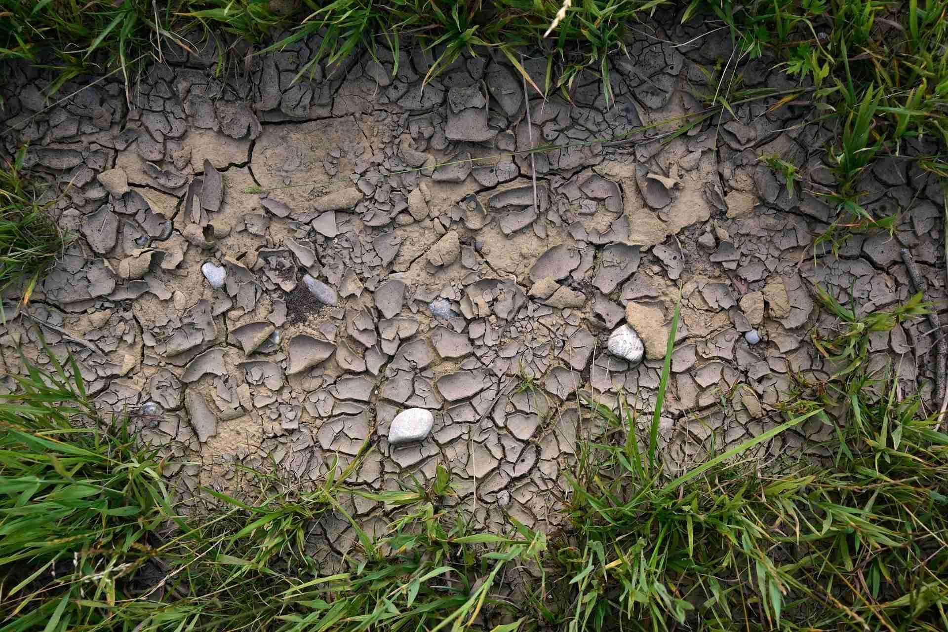 Vertrockneter Rasen retten