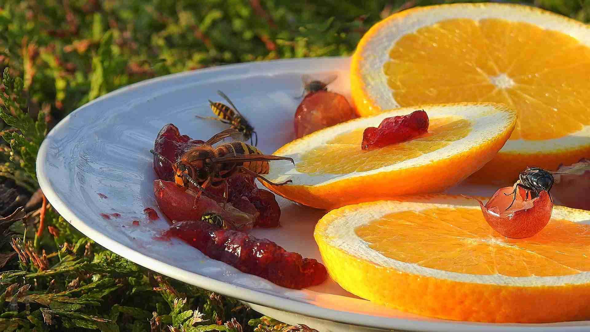 Wespenfalle selber machen