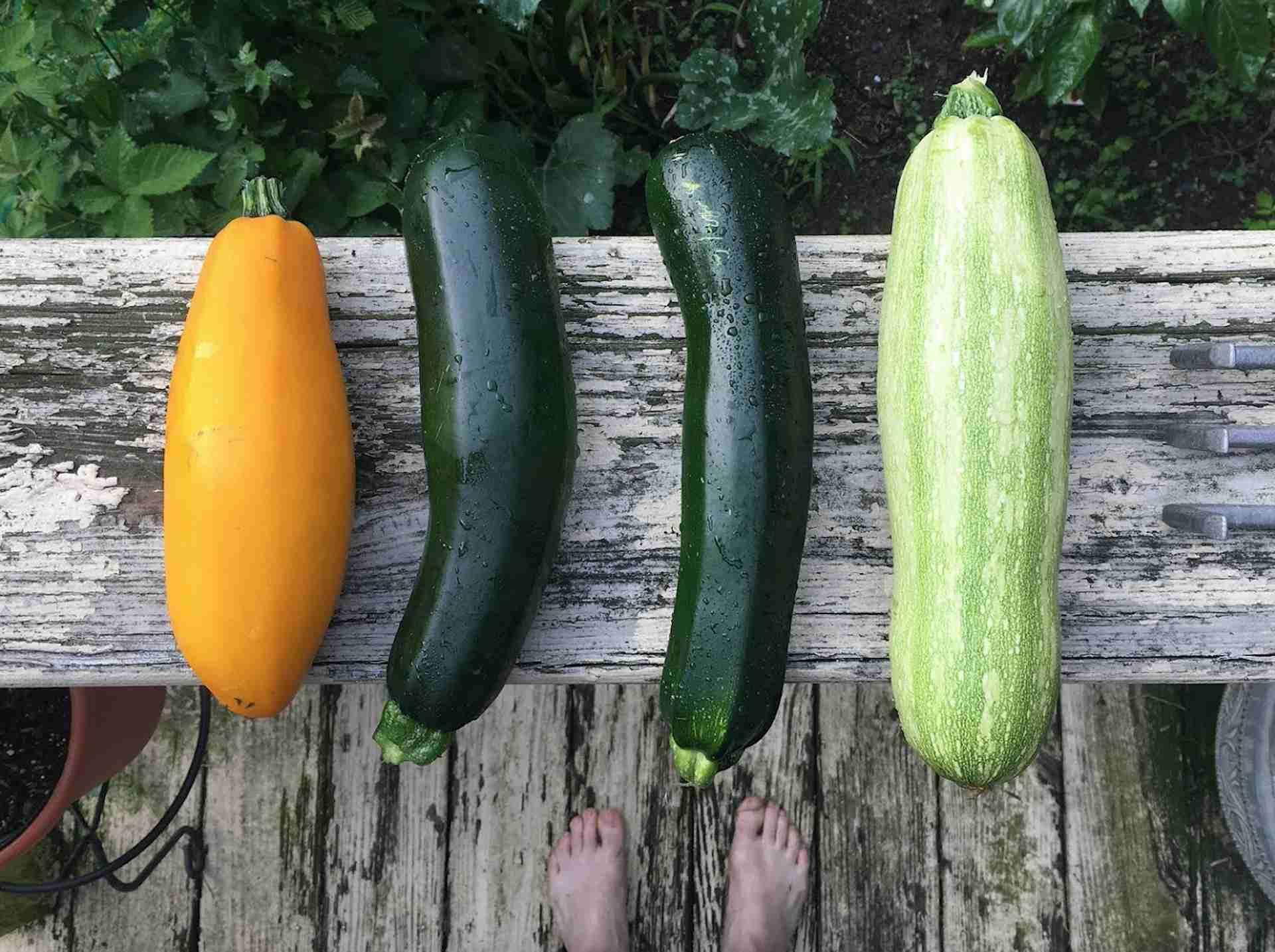 Zucchini schälen oder nicht