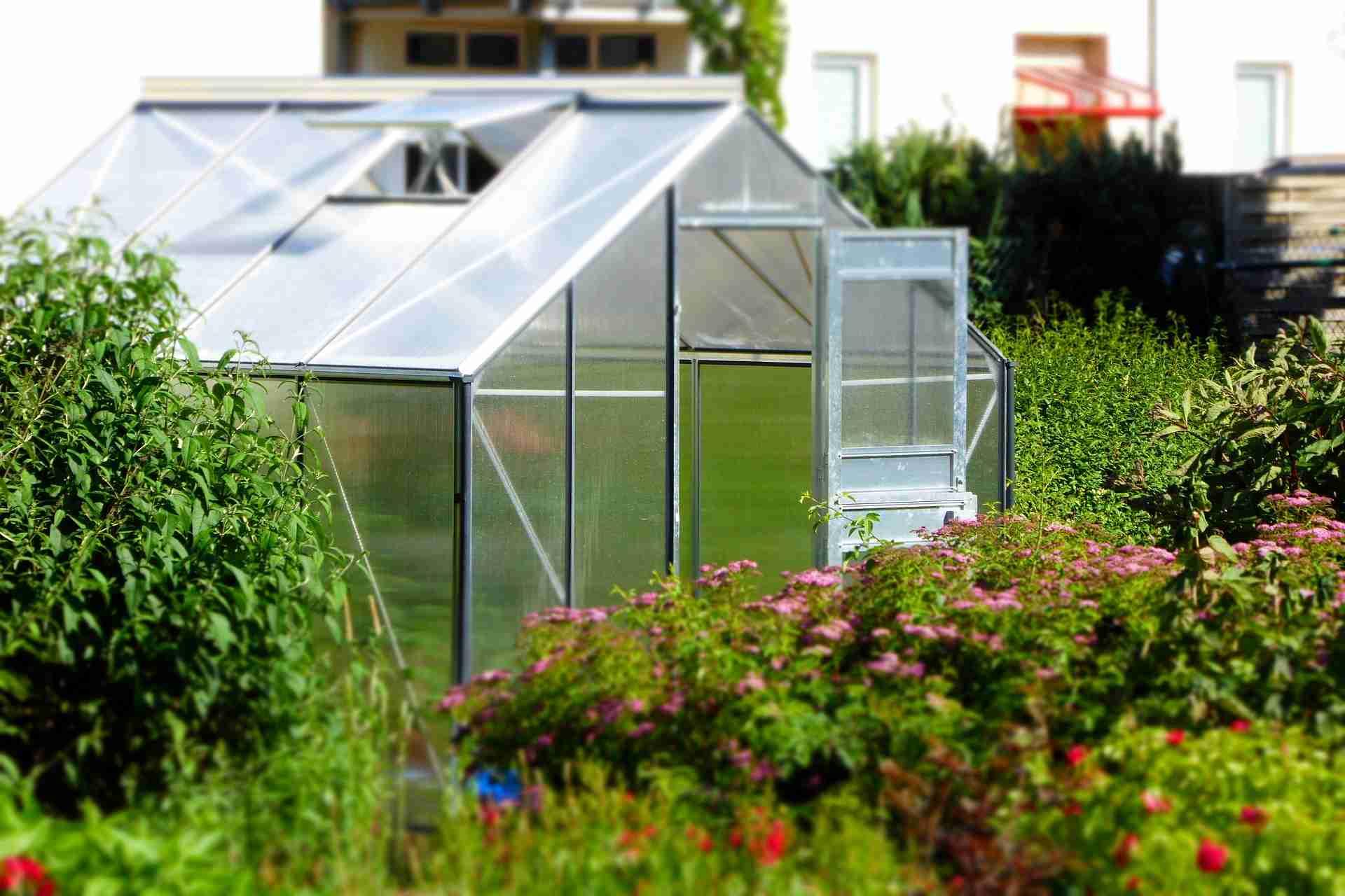 Gewächshaus bepflanzen