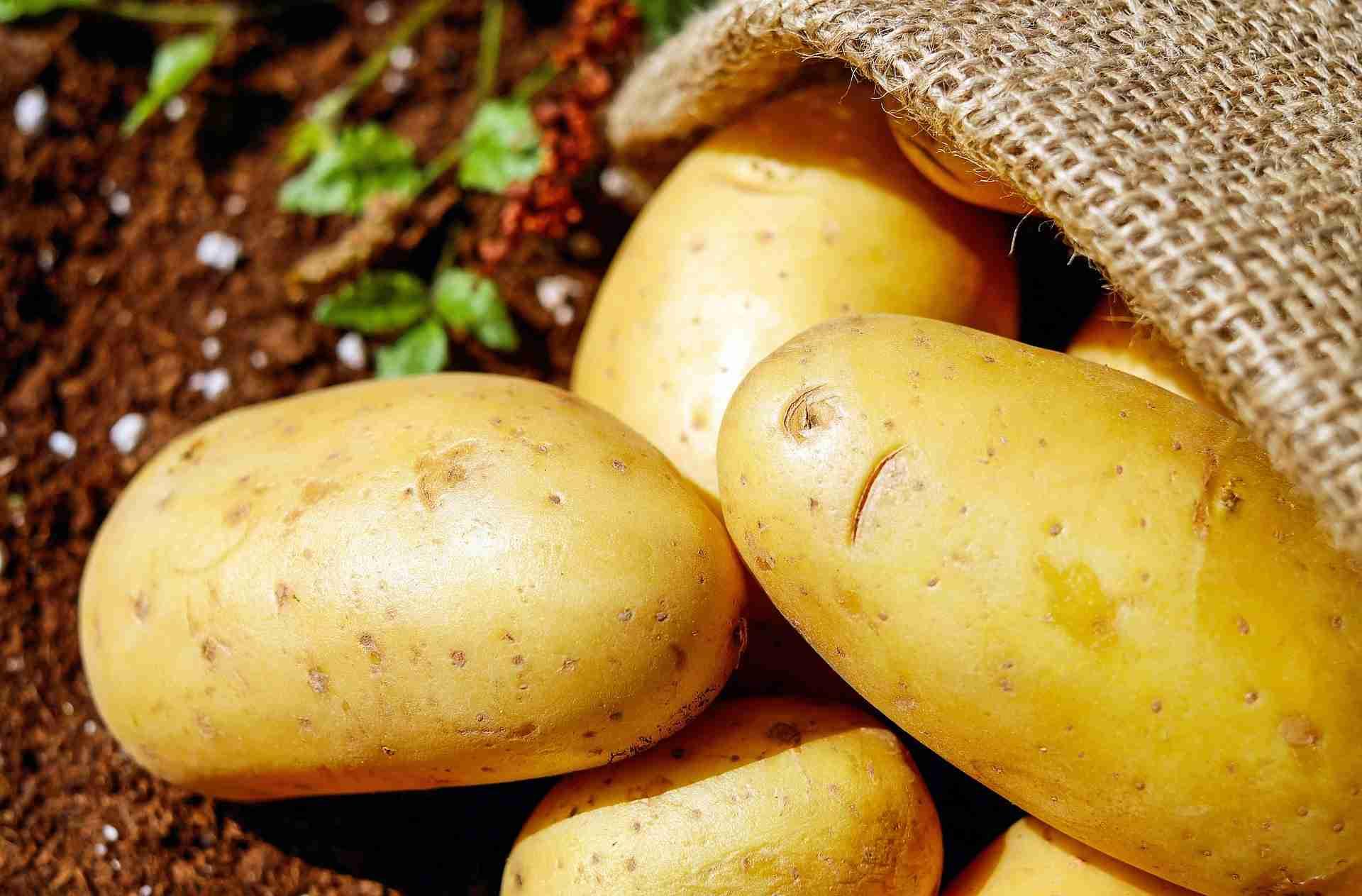 Kartoffeln festkochend mehlig Unterschied
