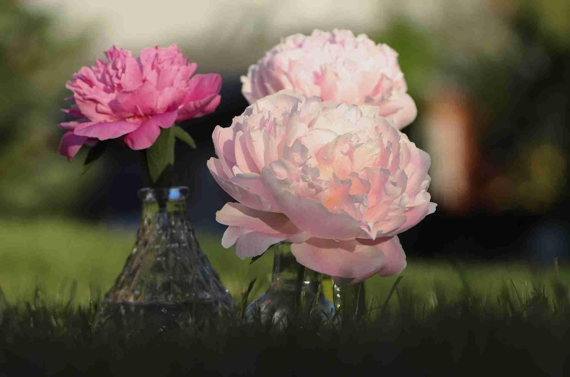 Pfingstrose Vase