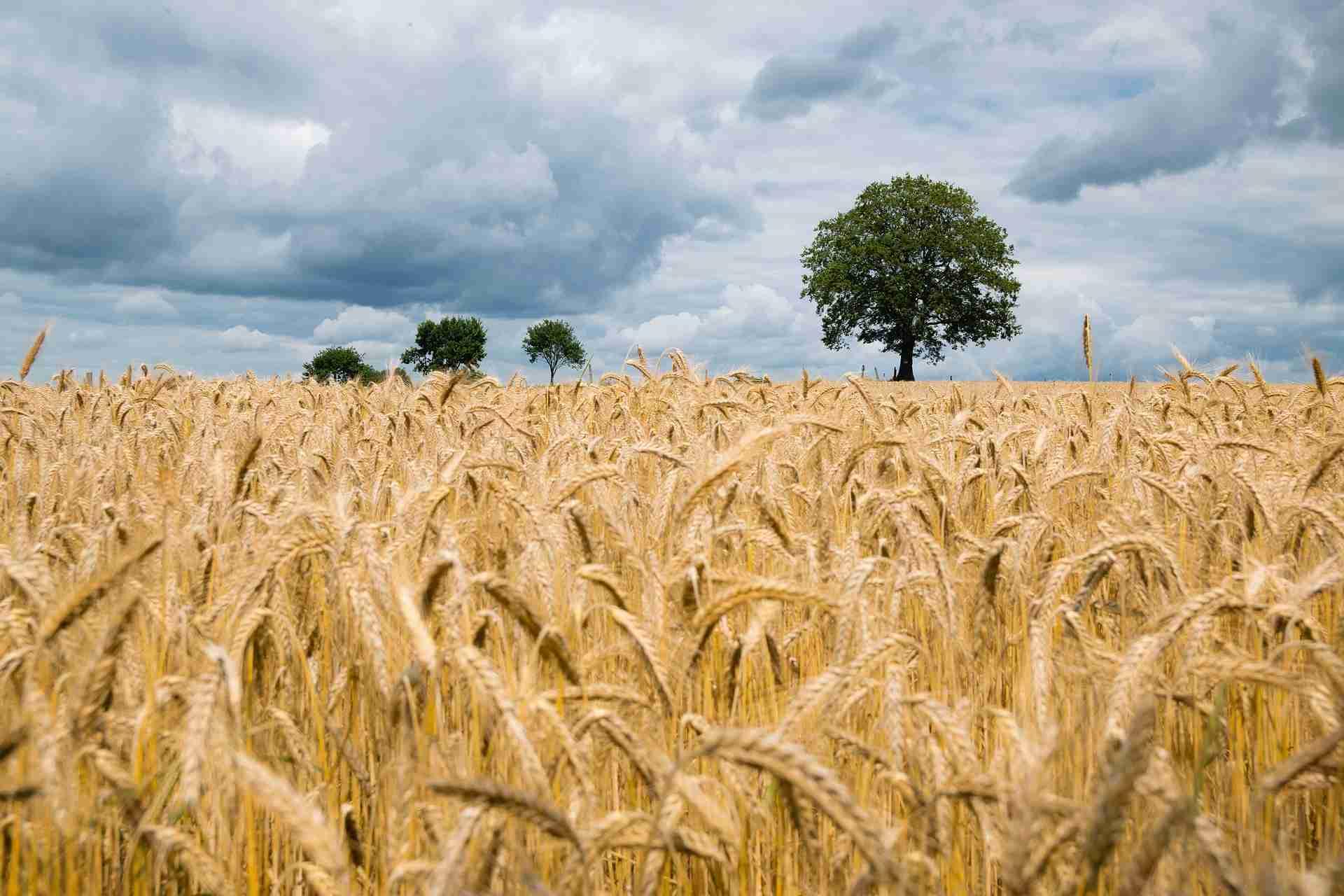 Samenfestes Saatgut Vorteile