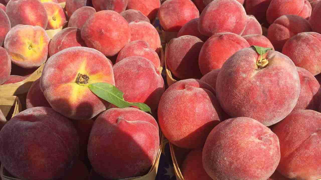 Pfirsiche einmachen Anleitung