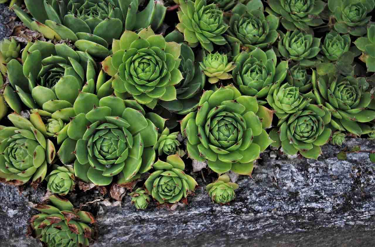Sukkulenten Garten Tipps