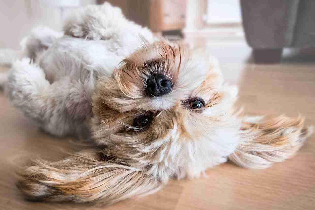 Hund Tierheim adoptieren