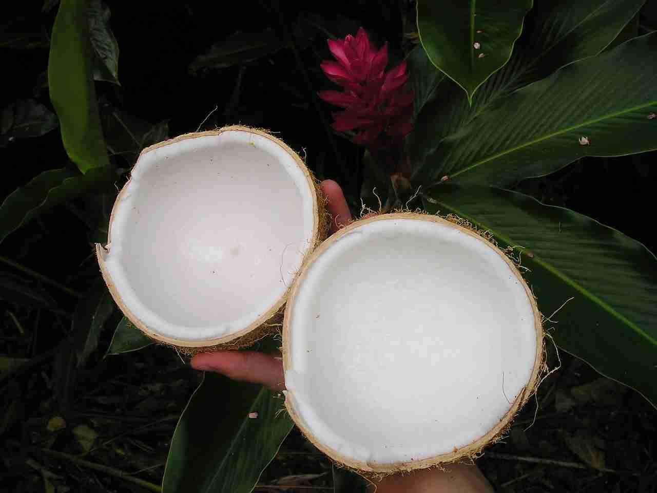 Kokosnuss verdorben Merkmale