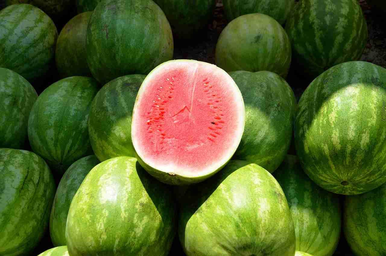 Wassermelone schlecht Merkmale